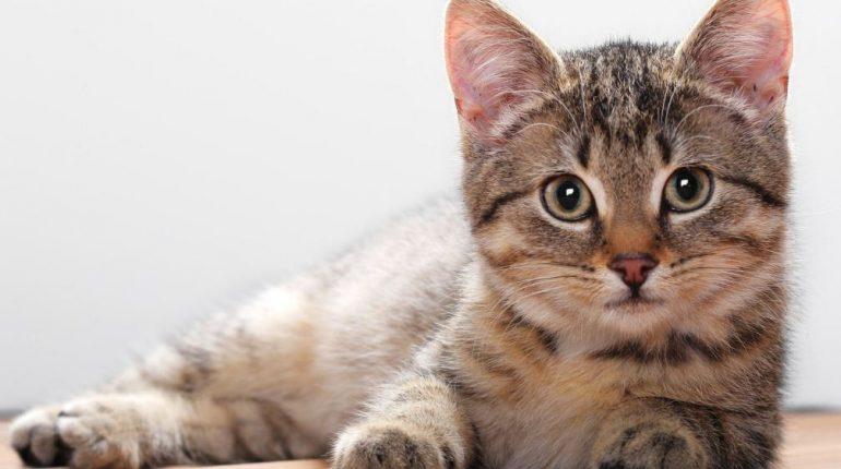 Contoh Report Text About Cat Terbaru Kakak Pintar
